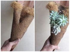 palmcoco+succulents