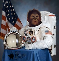 Cold War 'Space Race' Rivals Take Back Seat To Iran's Space Monkey ... ' ...  from PetsLady.com ... The FUN site for Animal Lovers' | via @roncallari
