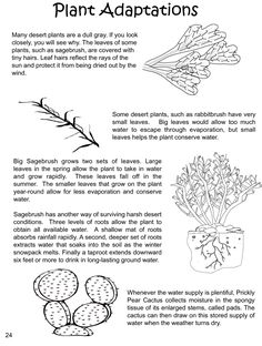 Plant Adaptations - Structures and Processes