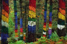 El bosque de Oma (Comarca de Busturialdea Urdaibaia) Bizkaia