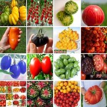 600 seeds 16 kinds of tomatos Variety complete very tasty ...