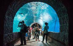 พิพิธภัณฑ์สัตว์น้ำหนองคาย (Nongkhai Aquarium) http://goo.gl/QFCGeR