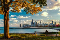 Chicago is home to more than 200 tree species and possibly as many as 300, officials say.