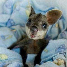 18 Little Kangaroo Joeys Who Will Make Your Heart Smile