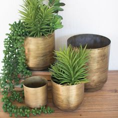 Here are some disadvantages of using metal flower pots that you should know before buying them. Brass Planter, Planter Pots, Living With Landyn, Painted Fox Home, Decorative Planters, Succulent Arrangements, Succulents, Pot Sets, Indoor Planters