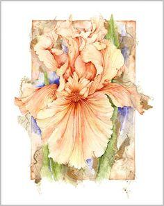 - Jan Harbon. watercolour iris painting