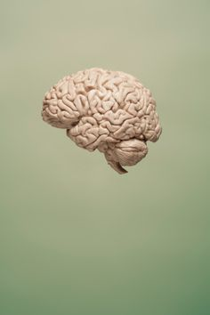 """'Game-Changing Discovery Links the Brain and the Immune System' by Alissa Greenberg """"Researchers at the University of Virginia School of Medicine have made a dazzling discovery, published this week in Nature: the brain is directly connected to the immune system by previously unknown vessels."""" Time.com 6-3-15"""