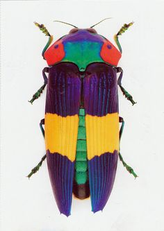 Jewel Beetle -The Insect Art of Christopher Marley