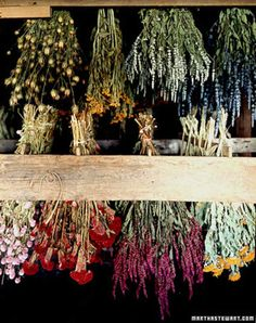 Flowers for Drying: Everlastings to Grow