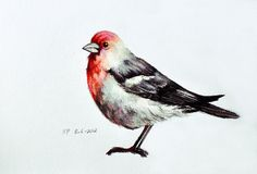 Red Bird 2 - Original Colored Pencil Drawing 5.5 x 8 inch