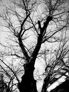 Thin Fall Tree