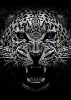 Jaguar Wallpaper, Cheetah Wallpaper, Wild Animal Wallpaper, White Wallpaper, Most Beautiful Animals, Majestic Animals, Beautiful Cats, Black Jaguar Animal, Herren Hand Tattoos