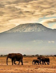 Kilimanjaro, Tanzania, the highest mountain in Africa Pinned by Green Mountain Lodges Safari Tours. Visit our website here: Safari Outfits, Monte Fuji Japon, Monte Kilimanjaro, Places To Travel, Places To See, Les Continents, Photos Voyages, Mundo Animal, African Safari