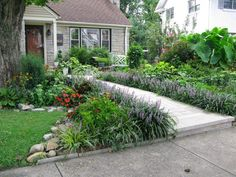 sidewalk border with liriope classic and easy