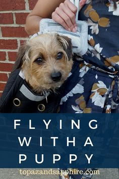 How to fly with a puppy on an airplane FOR FREE!!
