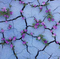 plants-growing-through-concrete-walls-stones-and-asphalt-500x492
