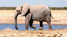 Reise nach Namibia - 25 € bei kostenlosem Airbnb, Link im Profil Namibia, Elephant, Link, Animals, Profile, Travel, Animais, Animales, Animaux