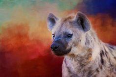 Hyena! This image was taken in Botswana, Africa.