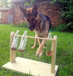 Spinning Plastic Bottle Dog Treat Game | Just DOGS! :)