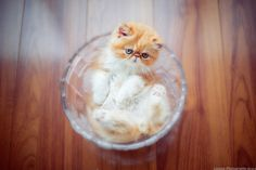 Beautiful cat images Beautiful Cat Images, Cats, Desserts, Food, Tailgate Desserts, Gatos, Deserts, Kitty Cats, Meals