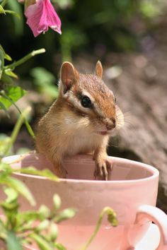 Chipmunk in cup.