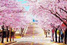 what a beautiful street