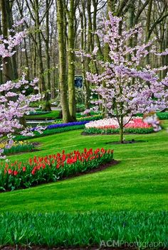 Keukenhof Spring Tulip Gardens, Lisse, The Netherlands. Beautiful Photos Of Nature, Nature Pictures, Amazing Nature, Beautiful Landscapes, Most Beautiful Gardens, Beautiful Flowers Garden, Amazing Flowers, Exotic Flowers, Purple Flowers
