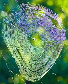 Spider Web | Flickr - Photo Sharing!