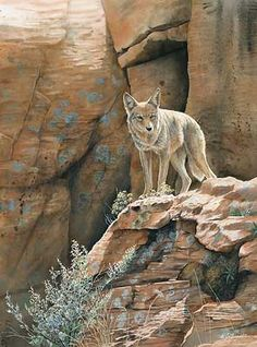Red Rock Canyon-Coyote by Susan Bourdet Watercolor Coyote Drawing, Wolf Hybrid, Coyote Hunting, Pheasant Hunting, Archery Hunting, Animal Magic, Southwest Art, Illustration, Wild Dogs