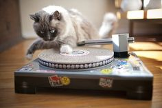 Veruschka DJ cat scratching pad 04
