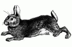 Vintage Easter Rabbit Illustration - Click for printable artwork