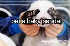 Or baby anything