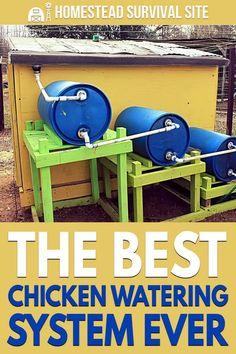 Diy Chicken Coop Plans, Backyard Chicken Coops, Backyard Farming, Chickens Backyard, Diy Chicken Waterer, Chicken Run Ideas Diy, Automatic Chicken Waterer, Backyard Ducks, Chicken Coop Run