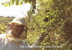 Am asistat cu plăcere și inters la episodul: Cum să recoltezi un roi de albine, pe care l-am identificat într-un tufiș din marginea fermei,