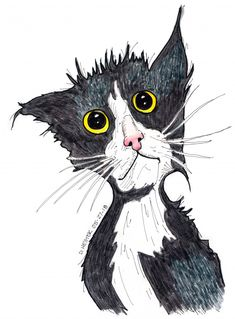Scruffy Kitten drawing by Darren Hester | Doodle Addicts