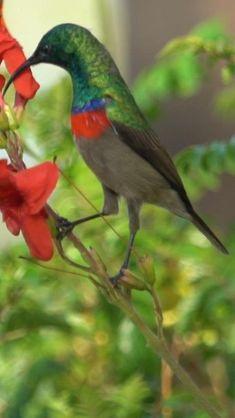Most Beautiful Birds, Beautiful Nature Pictures, Beautiful Creatures, Animals Beautiful, Cute Animals, Exotic Birds, Colorful Birds, Tropical Birds, Cute Birds