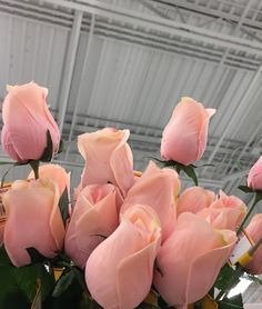 Imagem de flowers, rose, and pink Flower Aesthetic, Pink Aesthetic, Nature Aesthetic, Aesthetic Vintage, Pink Flowers, Beautiful Flowers, Pink Roses, Flowers Nature, Pink Tulips
