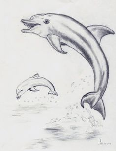 jumping dolphin sketch - Google Search