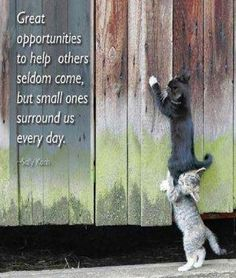 Great opportunities to help others seldom come, but small ones surround us every day. - #SallyKoch  #communityquotes #success #focus #motivation