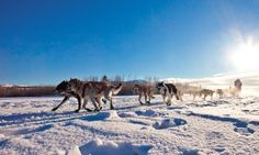 #Husky mush in Lapland, #Sweden http://www.wanderlust.co.uk/planatrip/inspire-me/lists/your-100-greatest-travel-experiences?page=all