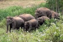 Wild Life in Wayanad, Nagarhole Elephant Sanctuary, Bandipur National Park and Tiger Reserve, Begur Wildlife Sanctuary Elephant Information, Elephas Maximus, Forest Department, Forest And Wildlife, Elephant Sanctuary, Elephant Family, Asian Elephant, Tourist Spots, Beautiful Creatures