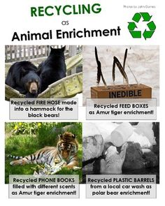 Recycling as Animal Enrichment