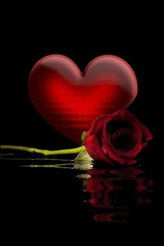 My heart gives you a red rose, they should tell you I love you my darling I Love Heart, With All My Heart, Hearts And Roses, Red Roses, Red Hearts, Heart Art, Shades Of Red, My Favorite Color, Heart Shapes