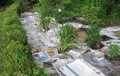 Чистый от сорняков участок без особых усилий...   дачный самоделкин   Яндекс Дзен