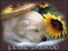 Imagen de un cachorro de Cocker durmiendo: Feliz Sabado