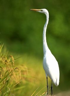 """Heron..Aggressive, self-determined, self-reliant, multi-tasking, balanced""... Would it better to say - in control? :)"