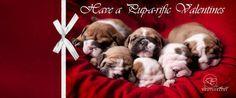 Heart shaped English Bulldog puppies