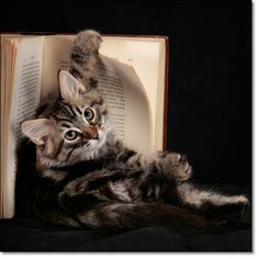 A photograph of A reader  : No books were harmed in making this photograph.           : Siberian kitten