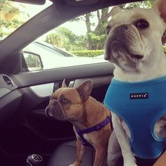 we better be on the way to the park….