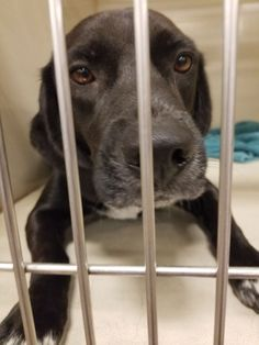 Charlie is an adoptable Dog - #beagle & Labrador Retriever Mix searching for a forever family near Melrose, FL. Use Petfinder to find adoptable pets in your area.